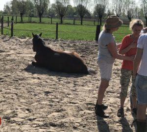 Systemisch werken met paarden